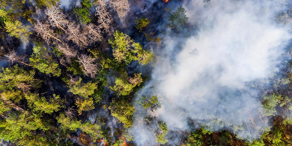 Una crisis es como un bosque en llamas